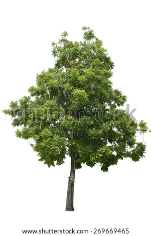 Isolated  tree on a white background with clipping path. - stock photo