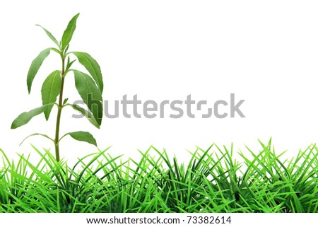 isolated tree on green grass