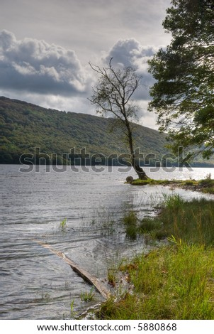 Isolated tree on the shore of Coniston Water in the English Lake District - stock photo