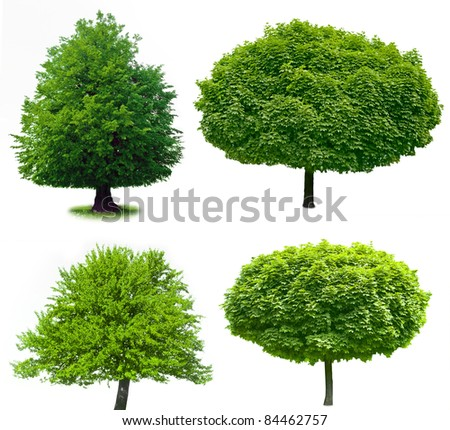 isolated tree on the white baskgrounds - stock photo