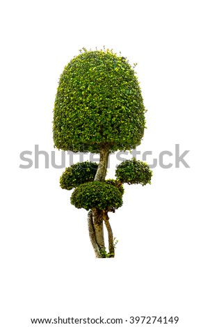 Isolated tree, plants on white background - stock photo