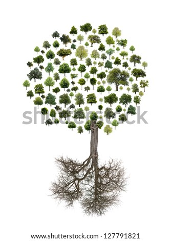 Isolated tree put together to be one big tree. - stock photo
