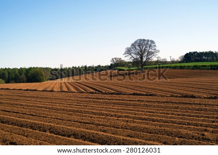 Isolated tree stands of edge of ploughed farmers field - stock photo