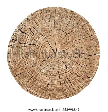 isolated tree. stump tree. rings wood. trunk wood. isolated tree. stump tree. rings wood. trunk wood. isolated tree. stump tree. rings wood. trunk wood. isolated tree. stump tree. rings wood. trunk  - stock photo