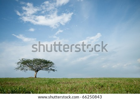 isolated tree with blue sky background