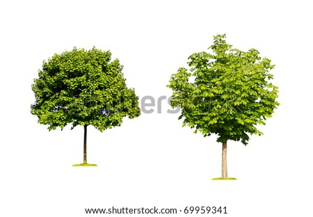 Isolated trees - stock photo