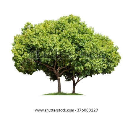 Isolated Tree On White Background Stock Photo 446463544 - Shutterstock