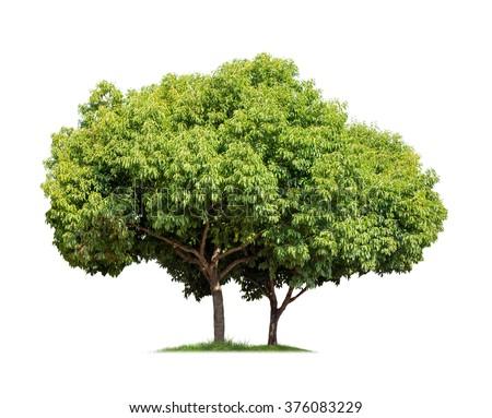 Isolated trees on white background - stock photo
