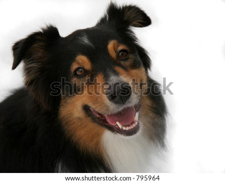 Isolated view of a smiling dog - stock photo