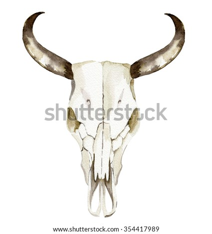 isolated watercolor illustration of cow scull with beautiful swirled antlers and detailed facial bone structure.  - stock photo