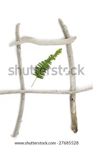 Isolated wood frame with green leaf