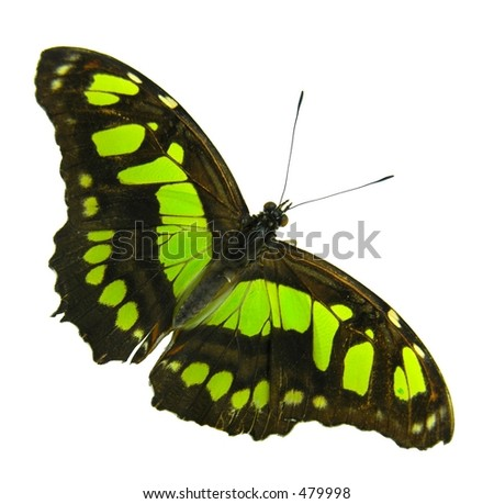 Isolated yellow-black buttefly - stock photo