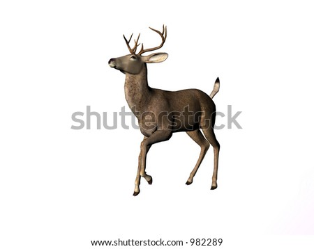 Isolated young male deer