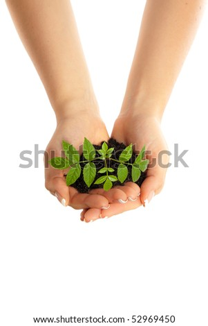 Isolated young plant in woman hands - stock photo