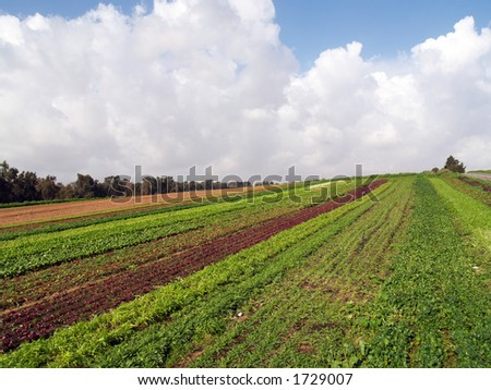 Israeli agriculture - stock photo