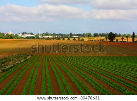 Israeli landscape with salad field - stock photo