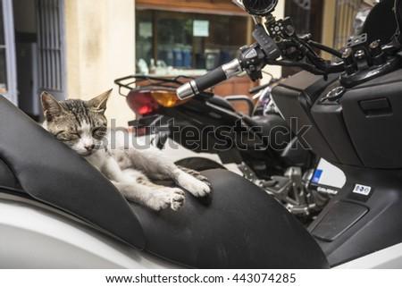Istanbul street cat - stock photo