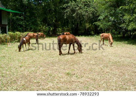 it brown horse in the farm.in the zoo thailand