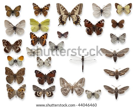 It is a lot of butterflies and one dragonfly in the collections of the scientist attached by needles to a white background. - stock photo