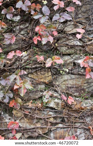 it is a wall with leaf background. - stock photo