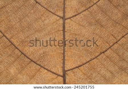 It is Dry leaf texture for pattern. - stock photo