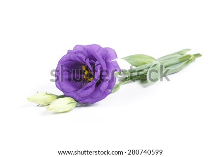 It is Lisianthus flower isolated on white. - stock photo