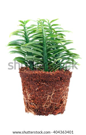 It is Ornamental plants with root isolated. - stock photo