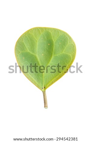 It is Single circle green leaf isolated on white.