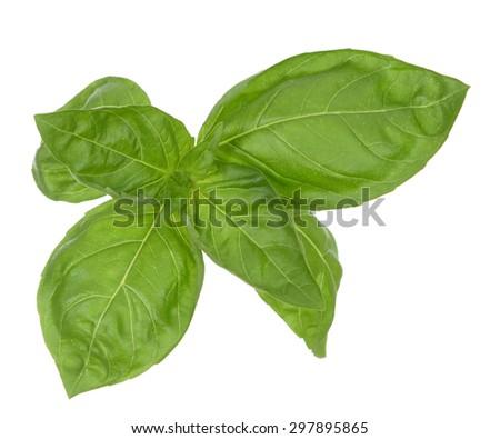 Italian basil leaf isolated on white background - stock photo