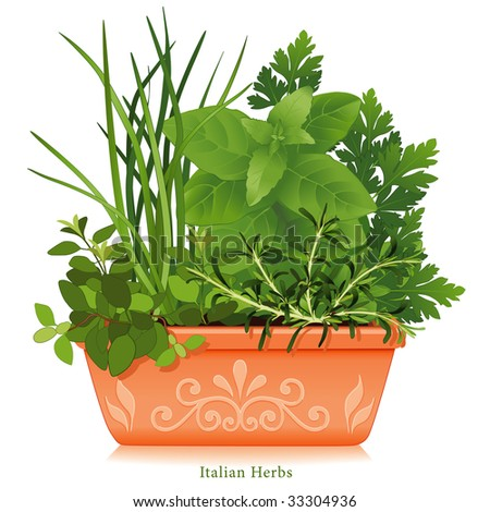Italian Herb Garden. Mediterranean cuisine, Oregano, Garlic Chives, Sweet Basil, Flat Leaf Parsley, Rosemary, clay flowerpot planter. See more herbs and spices in this series.