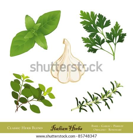 Italian Herbs. Traditional spices for cooking: Sweet Basil, Garlic, Italian Flat Leaf Parsley, Italian Oregano, Rosemary, isolated on white. - stock photo