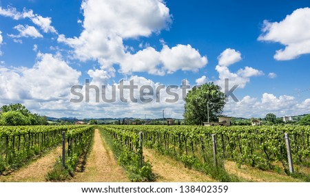 Italian Vineyard with sunny cloudy Sky - stock photo