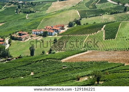 Italian vineyards - stock photo