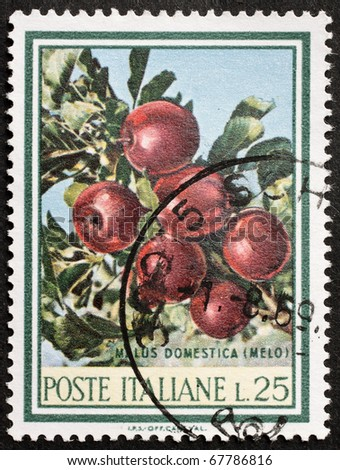 ITALY - CIRCA 1967: a stamp printed in Italy shows illustration of  Apple tree branch with red fruits. Italy, circa 1967 - stock photo