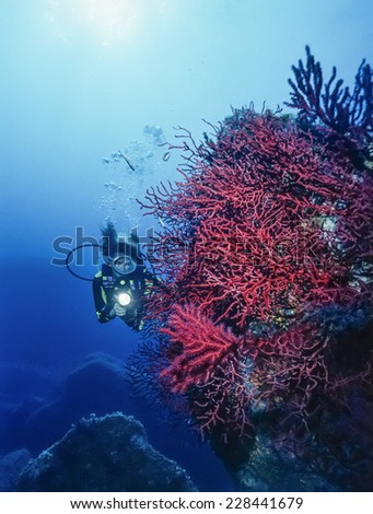 Italy, Tyrrhenian Sea, U.W. photo, diver and red gorgonians (Paramuricea clavata) - FILM SCAN - stock photo