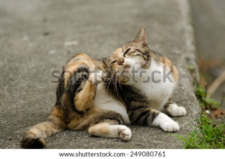 Itch tortoiseshell cat on ground in outdoor. - stock photo