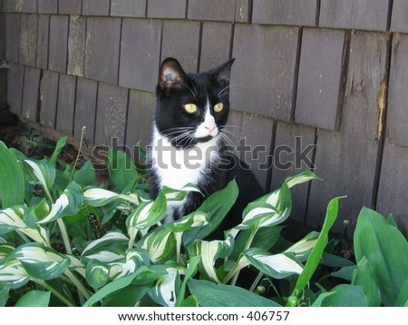 Ivan the cat sitting in green leaves in the garden - stock photo