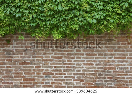 ivy and brick wall background