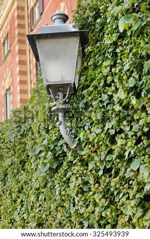 Ivy around street lamp ,lake Como ,Italy. - stock photo