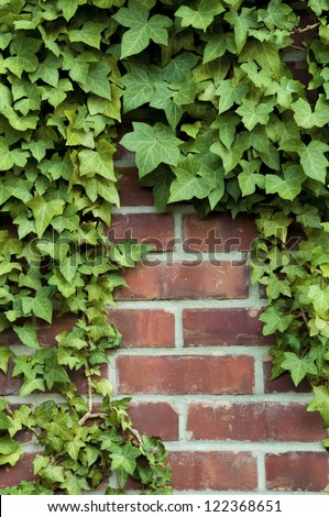 Ivy around the edges on a red brick wall - stock photo