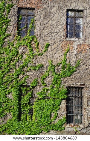 Ivy climbing the wall of an abandoned building - stock photo