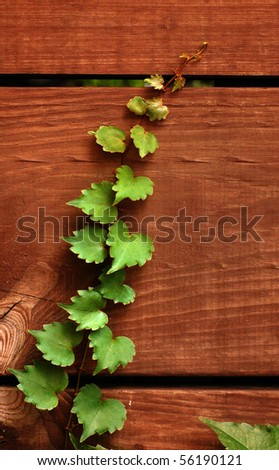 Ivy climbing wood slats in fence, green on brown - stock photo