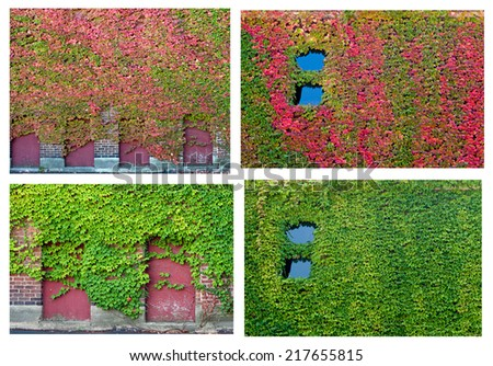 Ivy Collage - stock photo