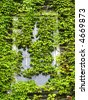 Ivy Covered Window - stock photo
