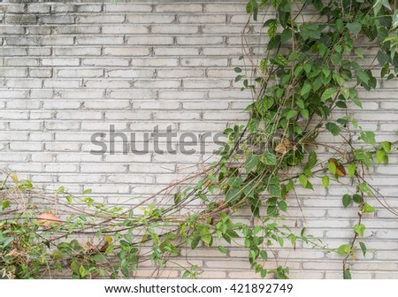 ivy leaves isolated on a brick background