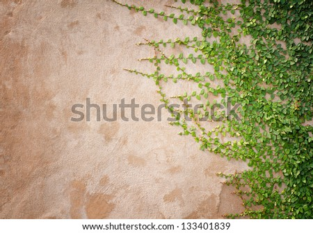 ivy leaves on wall background for wallpaper - stock photo