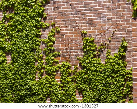 Ivy on a Brick Wall Outdoors - stock photo