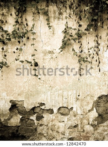 ivy  on an old colonial wall - stock photo
