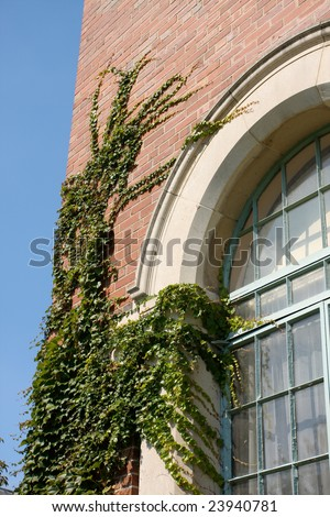 Ivy on University Building. - stock photo