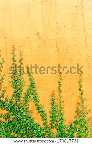Ivy on wall orange and free area - stock photo